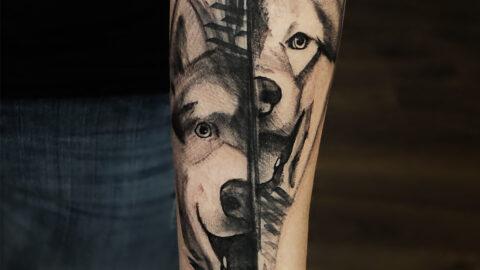 Dogos
