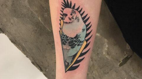 Papugai